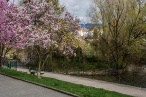 Promenade Lachenal canal Thiou lac Annecy vieille-ville escapade nature